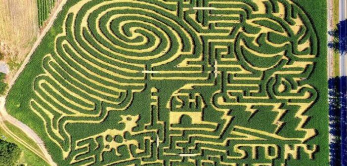 NJ corn maze corn maze in NJ Stony Hill Farm NJMOM