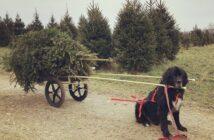Christmas tree farms in NJ njmom