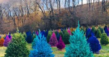 Christmas tree farms in nj