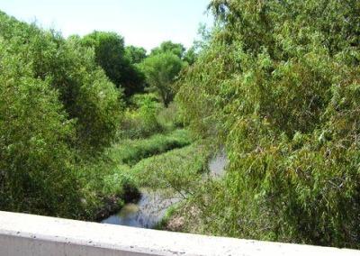 Cottonwood and Willow Trees along the Santa Cruz