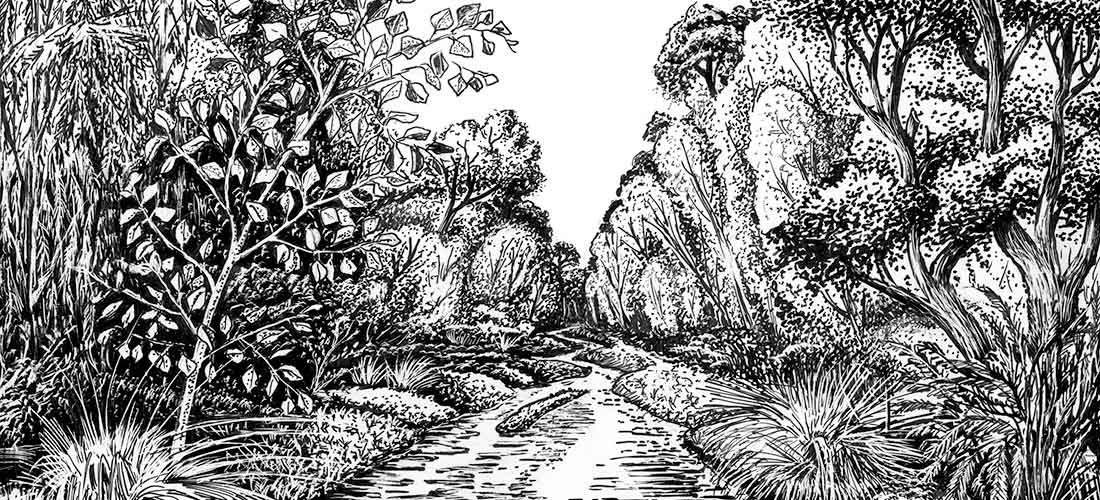 Pen and Ink Sketch of Cottonwood and Willow along the Santa Cruz