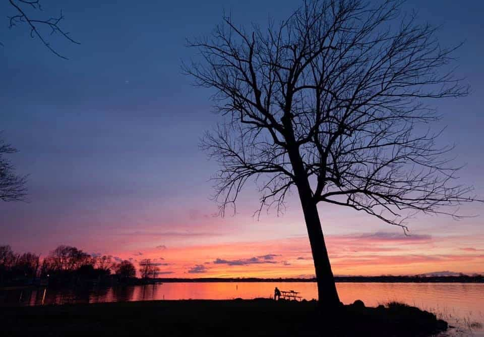 a tree at dusk with beautiful blue and pink night skies provides photography inspiration