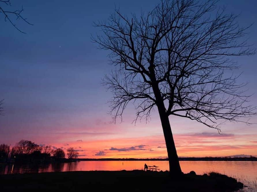 Tree with no leaves and sunset in background of lake