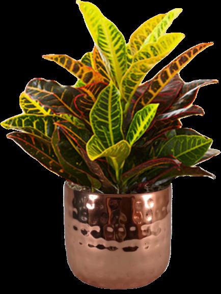 Croton hammered copper pot