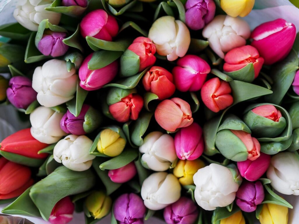 Tulips Are In Stores!