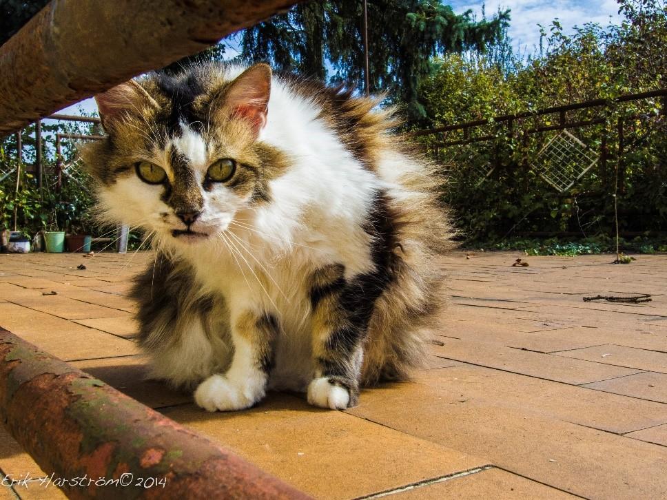 cat in sunshine