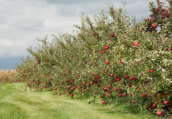 Archibald Orchards in Bowmanville Ontario