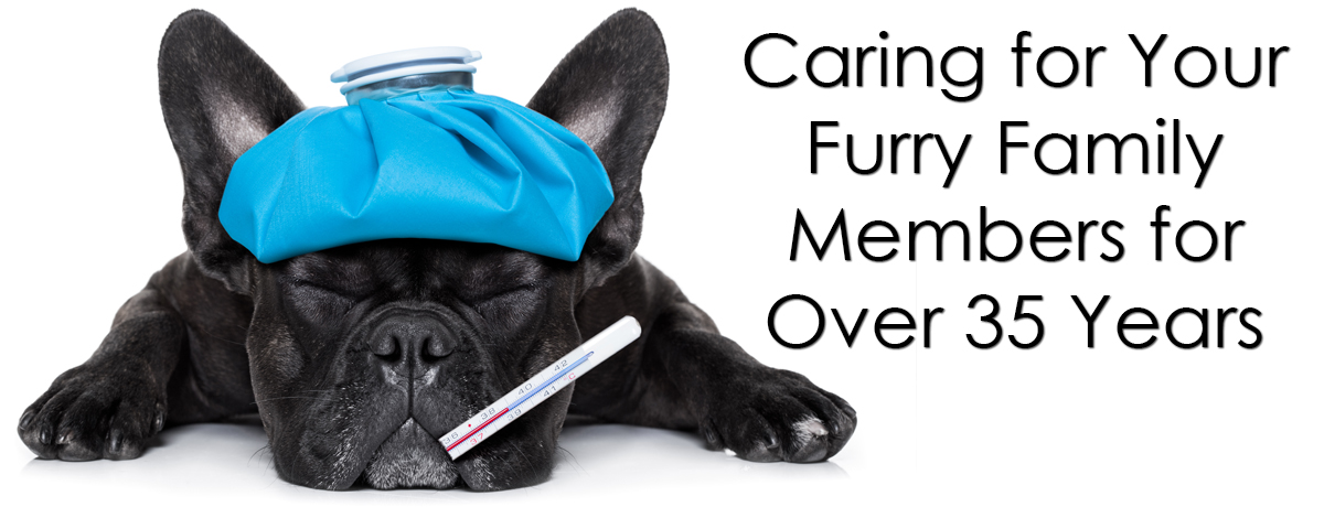 Caring for Your Furry Family Members for Over 35 Years