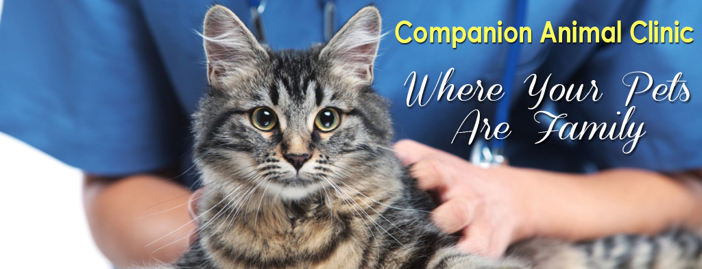 Companion Animal Clinic Where Your Pets Are Family