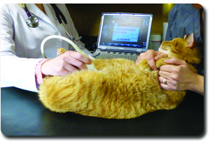 Veterinary Ultrasound Companion Animal Clinic Tecumseh MI