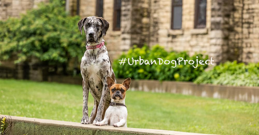 Urban Dog Project – Buildings & Colors