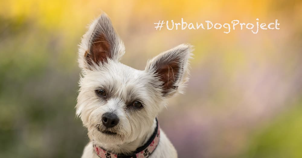Urban Dog Project – Color!