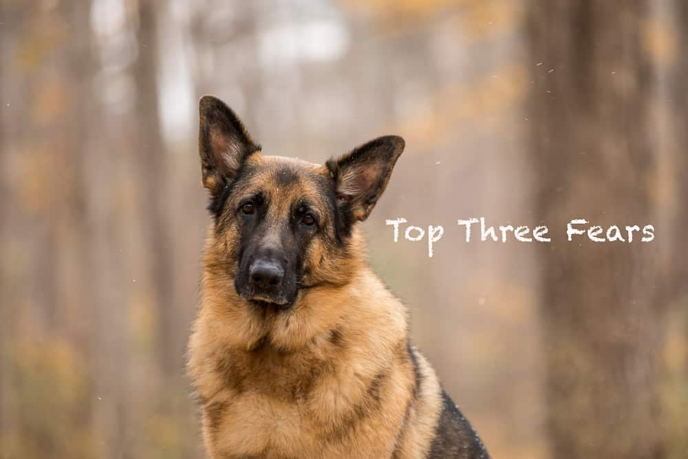Top Three Fears