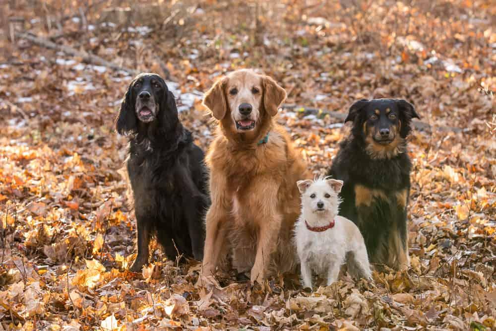 Shadow Dog Photography, Pet Photography, Dog Photography, Pet Photographer, Kenosha