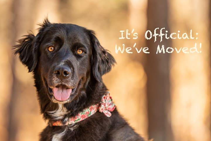 Shadow Dog Photography, Dog Photographer, Pet Photography, Dog Photos