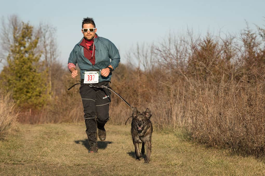 runner with happy brown dog at canicross race