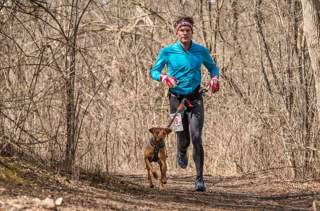 man and his brown dog running at canicross trail race event