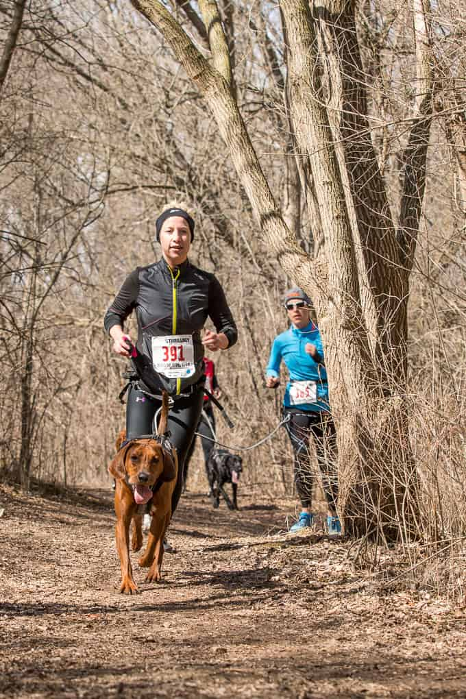 runner and his brown dog at canicross event