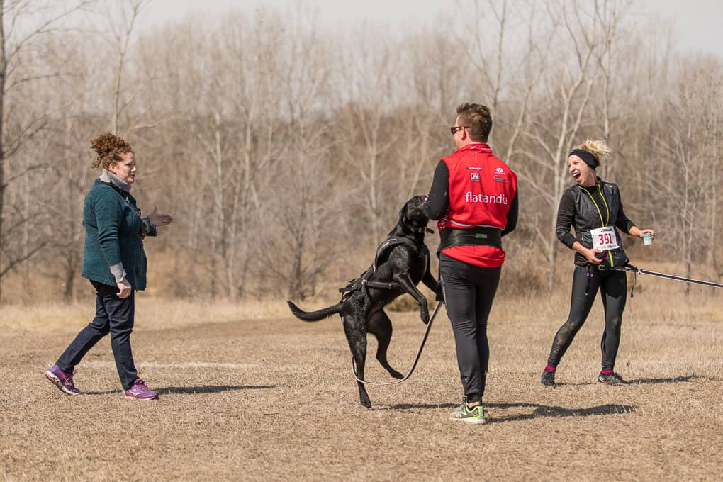 black dog jumping up before the start of canicross race
