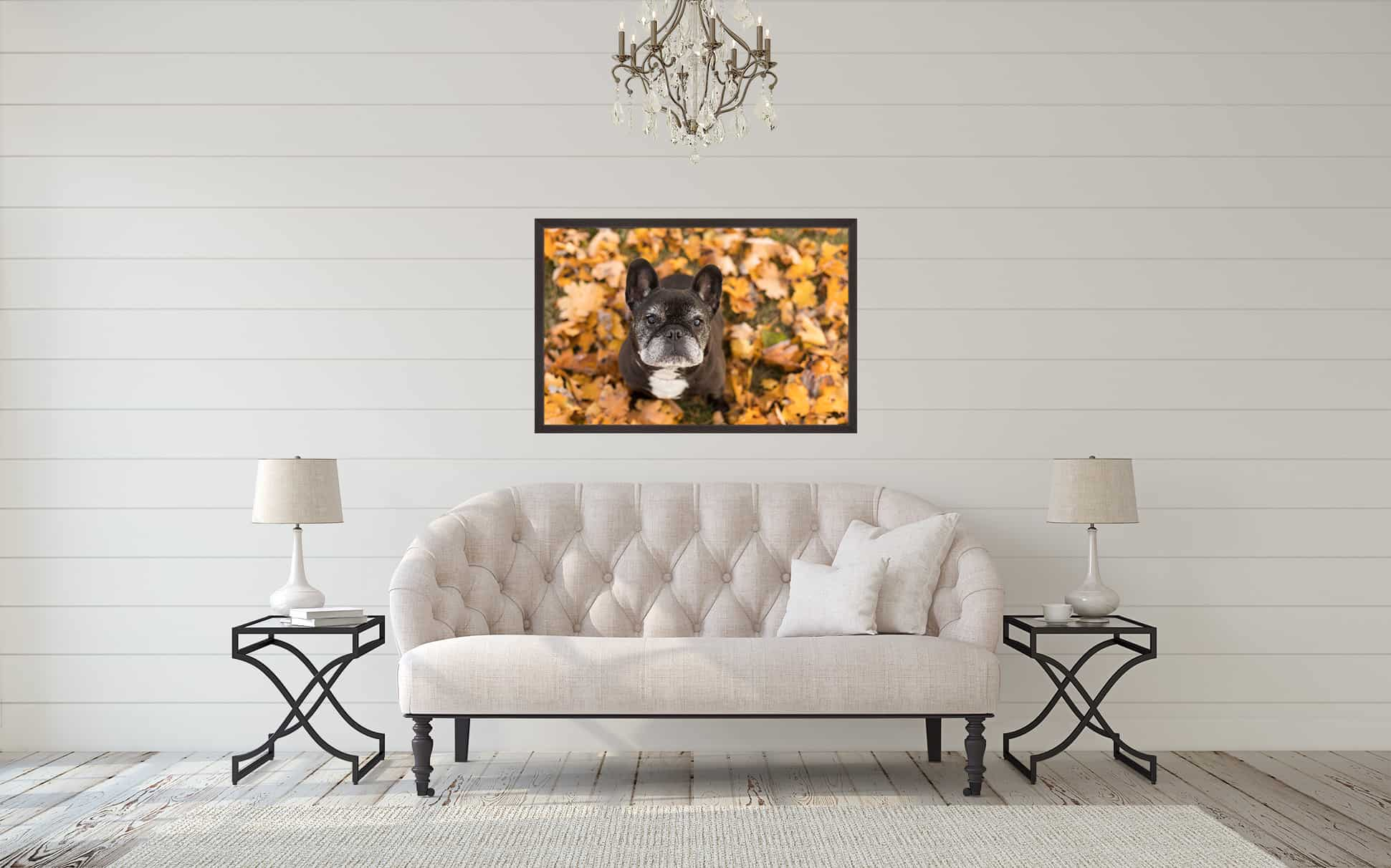 Framed Print of Black French Bulldog above Couch Shadow Dog Photography