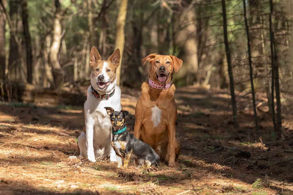 Three Dogs Sitting Shadow Dog Photography