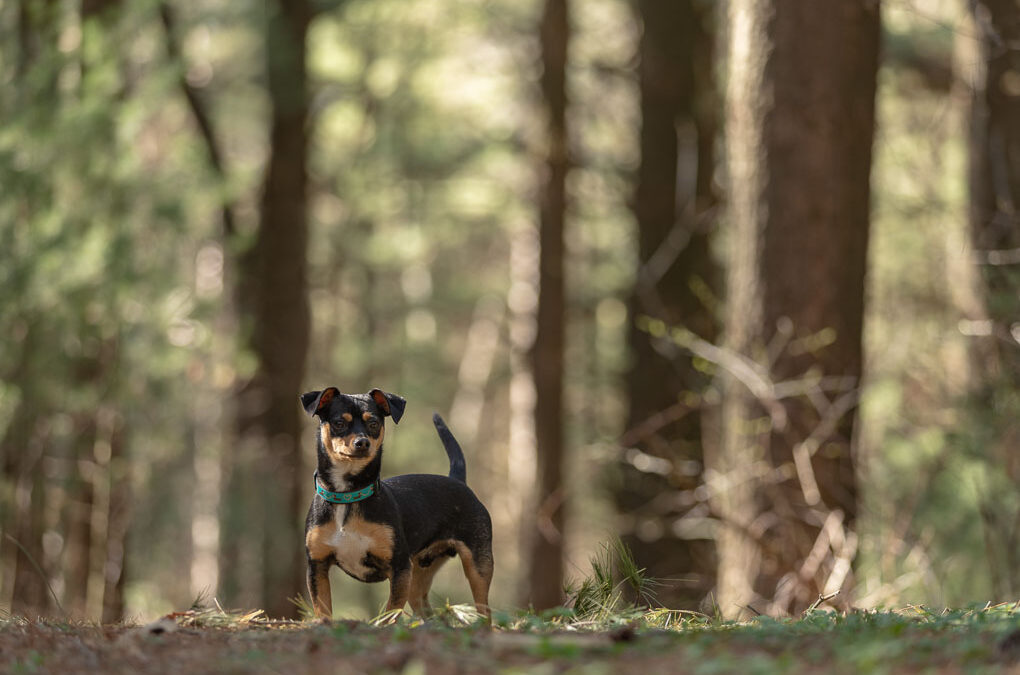 Black Terrier in Woods Shadow Dog Photography
