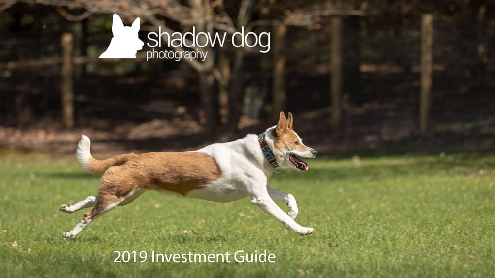 Running Dog Shadow Dog Photography
