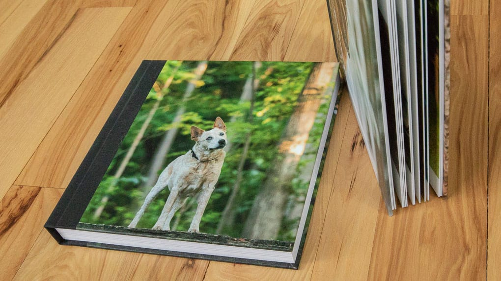 Dog on Cover of Photo Album Shadow Dog Photography