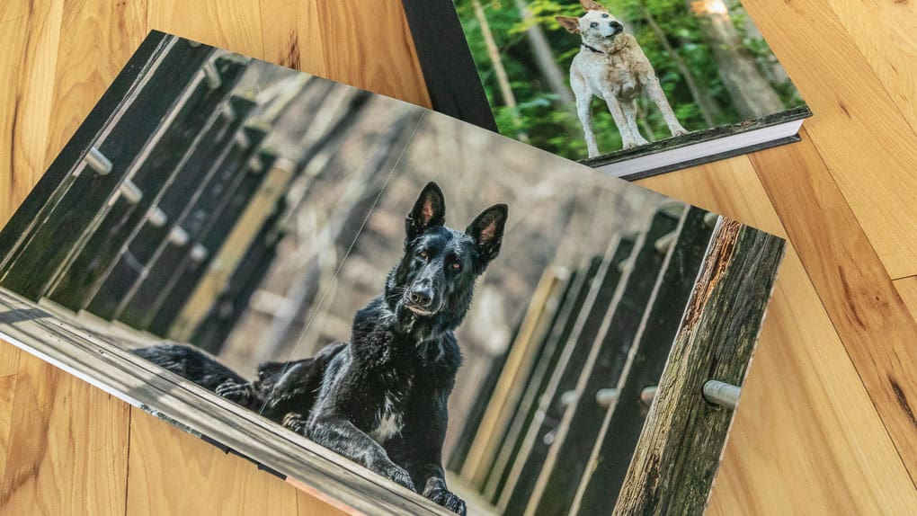 Dog in Photo Album Shadow Dog Photography