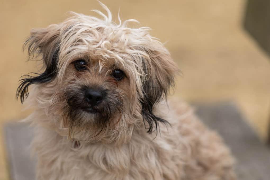 Scruffy White Rescued Dog Shadow Dog Photography