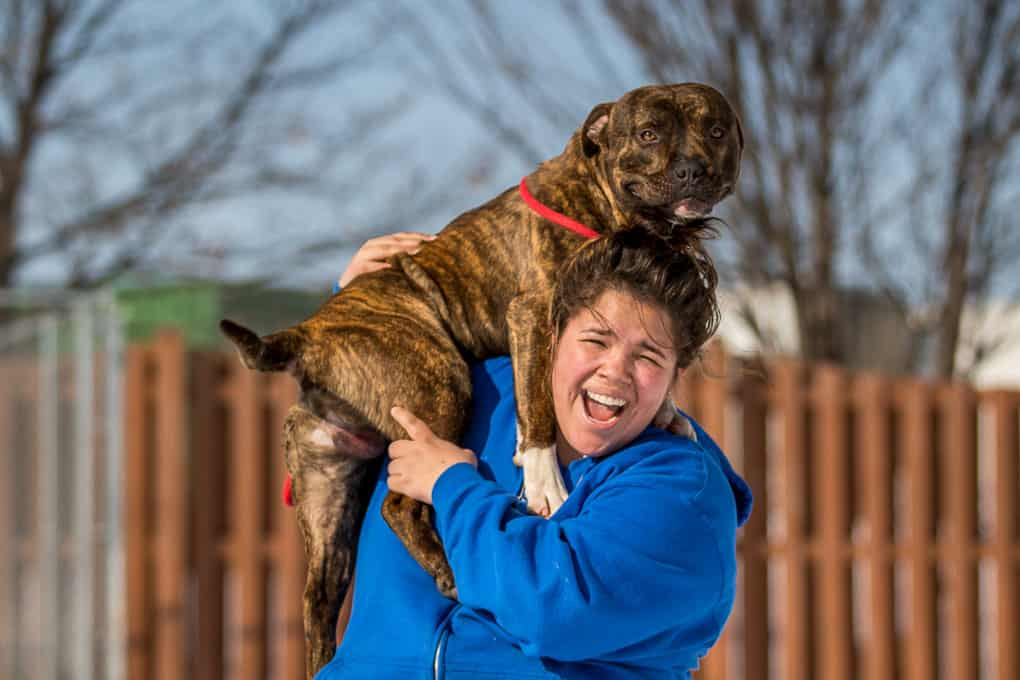 A Dog on A Person Shoulders Shadow Dog Photography