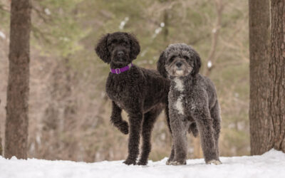 Rescued Dogs Project – Doodles Luna & Pepper