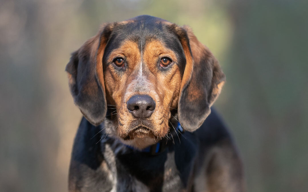 Rescued Dogs Project – Luka the Coonhound Mix