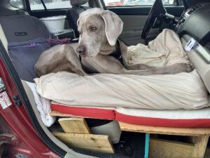 A dog sitting in a car seat.
