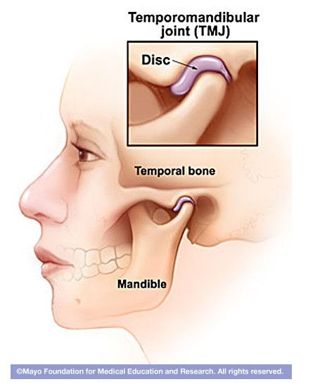 TMJ Anatomical Illustration