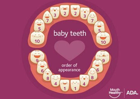 ADA-baby-teeth-eruption-chart