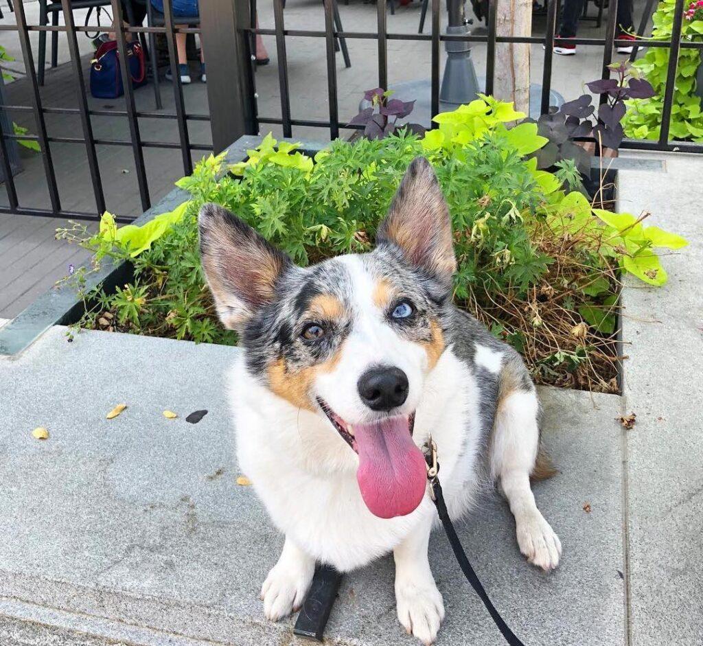Dog Friendly restaurants in salt lake city