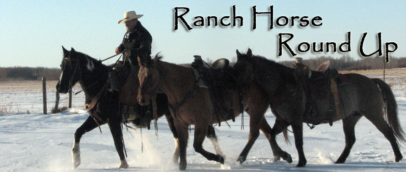 Ranch Horse Sale