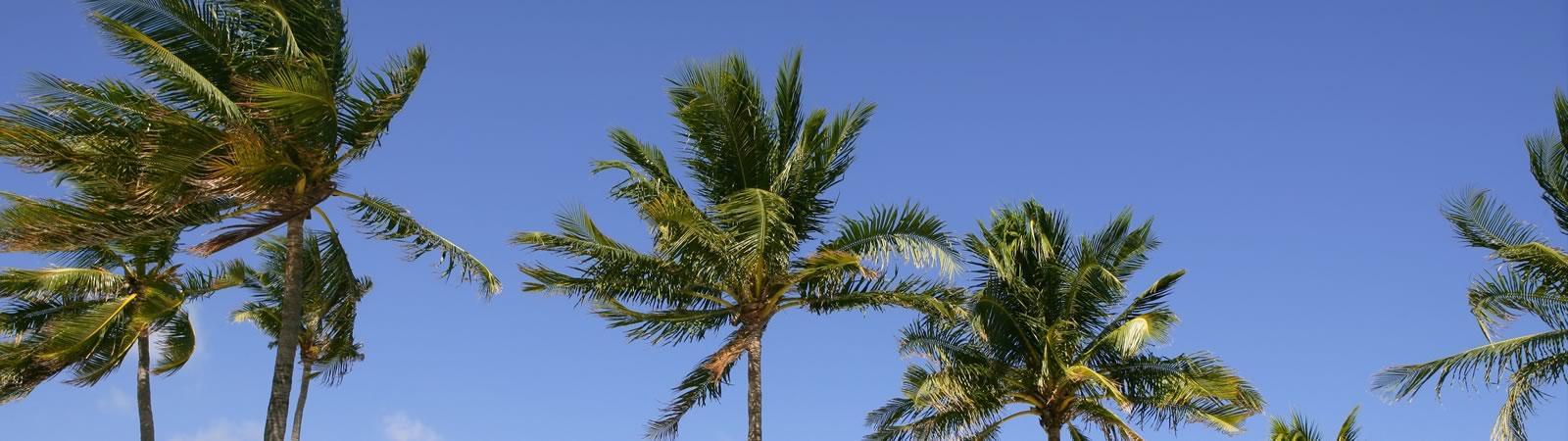 Calla Legal - Palm Beach Gardens