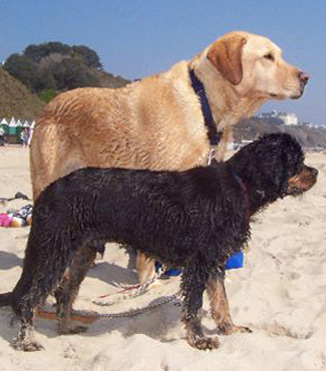 Rene and Frankie at the beach