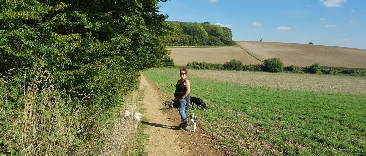 Jane walking dogs near Great Ashby, Stevenage
