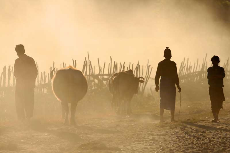 Farmers-and-buffaloes