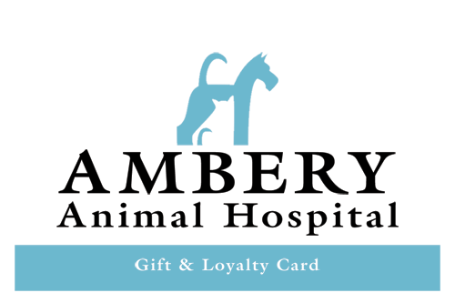 Ambery-Animal-Hospital_GC1