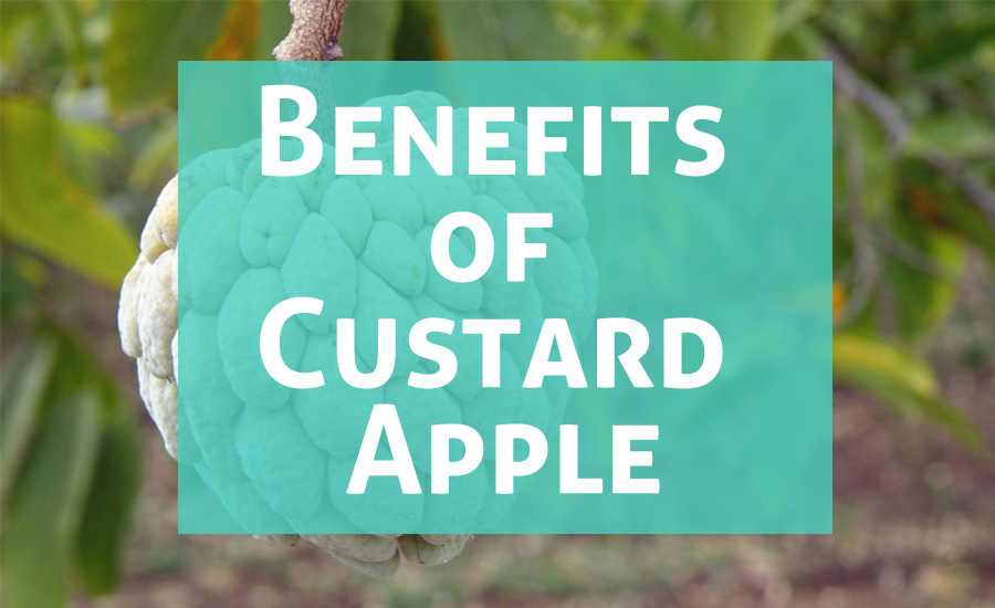 Atis Fruit: 10 Amazing Health Benefits of Custard Apple