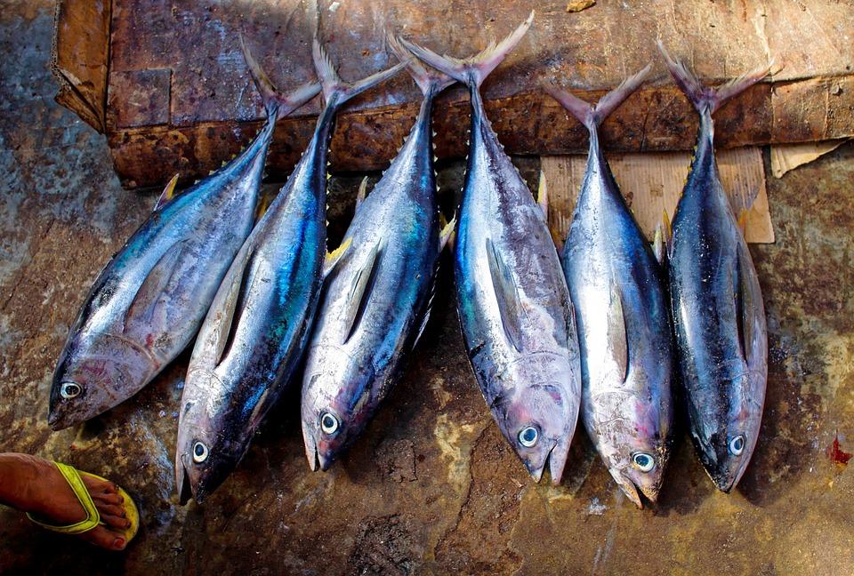 Fin Catch Fish Scales Tuna Fresh Tuna Fish