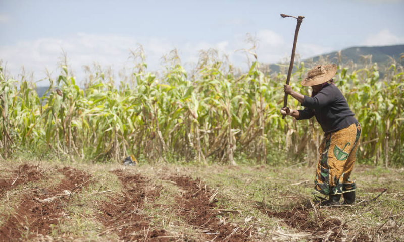 Prolonged drought creates food insecurity in Central America