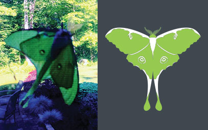 The Luna Moth