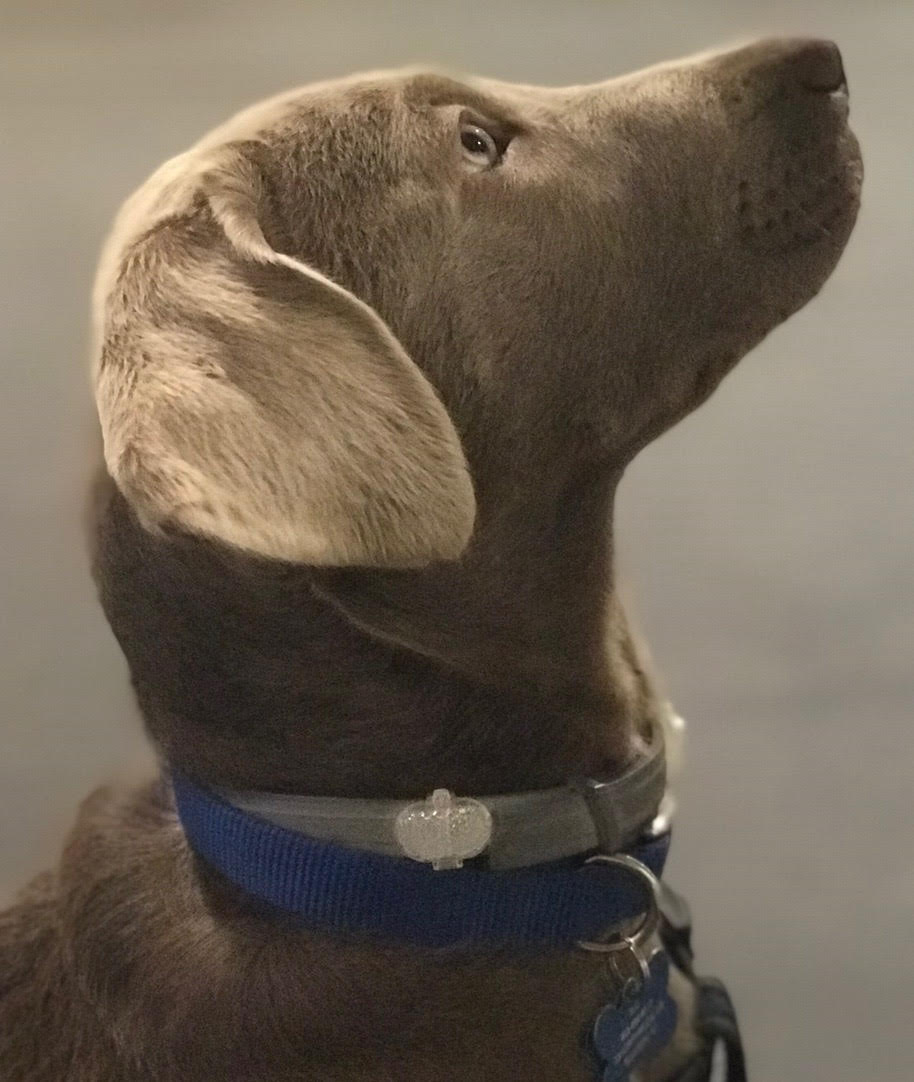 profile of a dog looking up patiently
