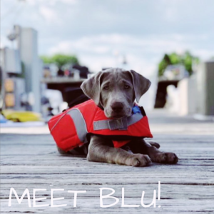 puppy sitting on a dock with a live jacket