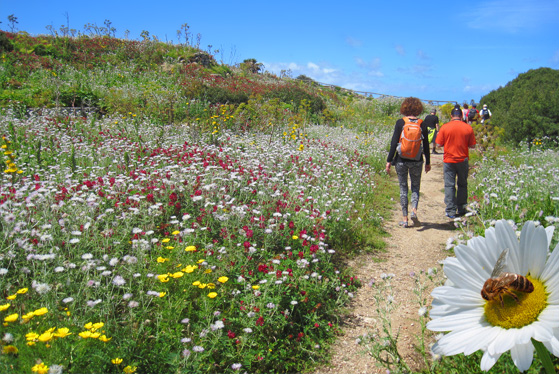 The Wayfarers Walking Vacations has released its Spring 2015 brochure, offering a sneak-preview of the full range of early season hiking tours across the globe.